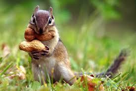 Act like a squirrel: prepare, prepare, prepare