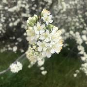 trevalli orchard